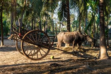 Beautiful Countryside trip in tropical rural district, Siem Reap, Cambodia Wall mural