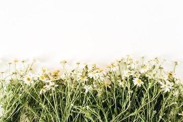 Photo sur Plexiglas Marguerites Chamomile daisy flowers on white background. Flat lay, top view minimal floral hero header.