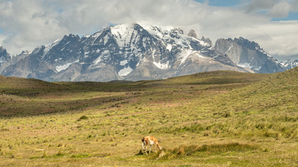 Torres Del Paine Berge mit Guanako