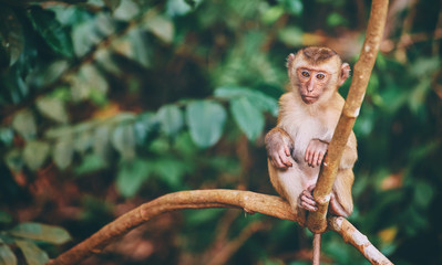 Poster de jardin Singe Cute little monkey sits on the tree