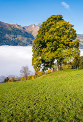 Misty autumn morning mountain and big lonely tree view from hiking path near Dorfgastein, Land Salzburg, Austria.