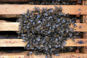 How bees winter in the hive. Overview of bee hive in winter. Wintering bees.