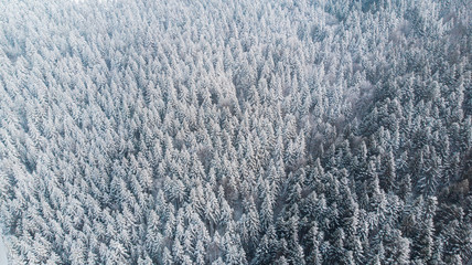 Abstract Winter Wonderland. Pine Trees Snow Covered. Aerial Drone view