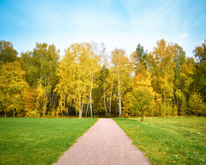 Photo Stands Road in forest Walkway in the autumn forest or the park among the green grass under the blue sky