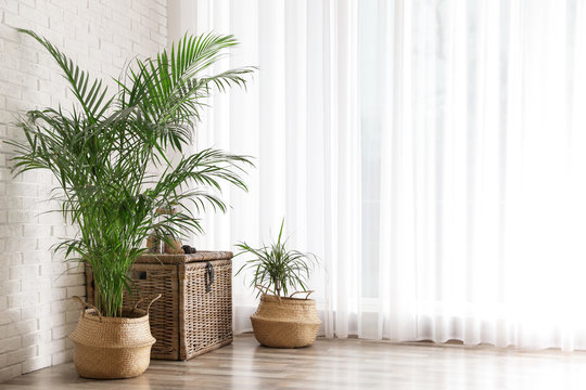 Beautiful green potted plants in stylish room interior. Space for text
