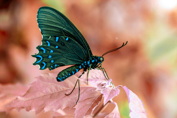 Acrylic Prints Butterfly Closeup beautiful butterfly sitting on the flower.