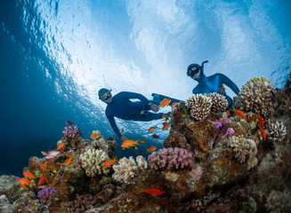 Wall Mural - Two freedivers swim over the vivid coral reef in a tropical sea