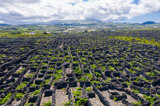 Man-made landscape of the Pico Island Vineyard Culture, Azores, Portugal. Pattern of spaced-out, long linear walls running inland from, and parallel to the rocky shore with Pico volcano in background