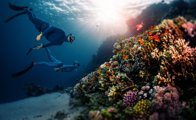 Wall Mural - Two freedivers swim over the vivid coral reef in a tropical sea during their recreational freedive session. Tilt shift effect applied