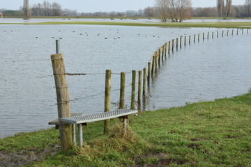 Flooded meadows near river IJssel with meadow fence