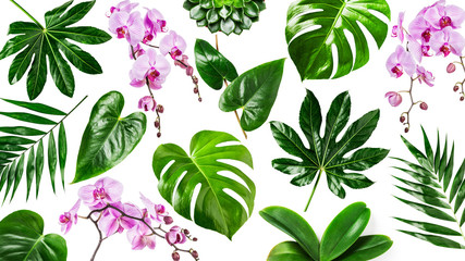 Orchid flowers and tropical green leaves background