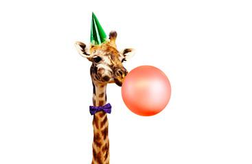 Photo sur Aluminium Girafe Giraffe blow air balloon birthday party white bg