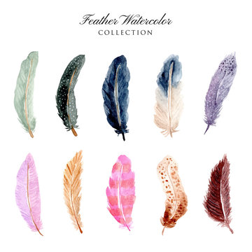 beautiful feather watercolor collection