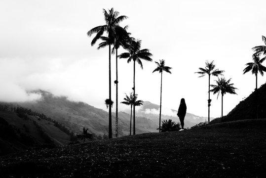 Valle del Cocora Salento Quindio Colombia BN