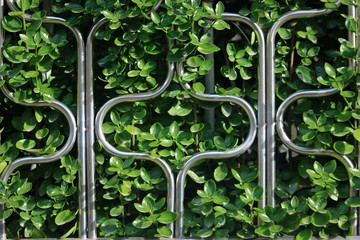 푸른 나무잎