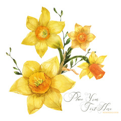 Yellow spring floral bouquet with daffodil flowers, traced watercolor