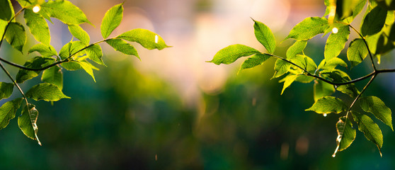 fresh green leaves in spring and bokeh background Wall mural