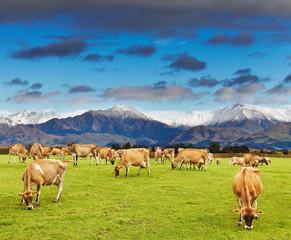 Fototapete - New Zealand landscape