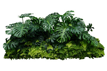 monstera jungle leave plant isolated include clipping path on white background Wall mural