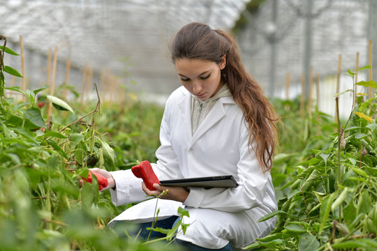Young agronomist in greenhouse controlling vegetables