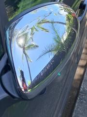 Reflets de palmier sur rétroviseur nickel