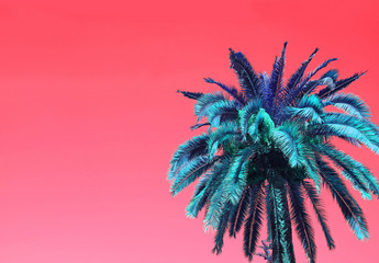 Tuinposter Pop Art Pop Art Surreal Style Blue Palm Tree on Coral Pink Background with Copy Space