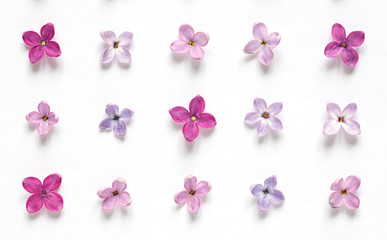 Poster Lilac Rows of many small purple and pink lilac flowers on white background