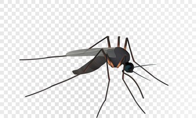 Realistic illustration of a mosquito. Insect. Realistic mosquito. Vector image of a mosquito isolated on white background.