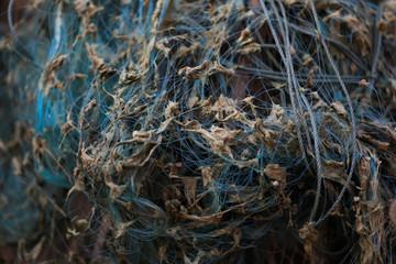Algae are seen in a fishing net near Mekong river bank outside Nong Khai