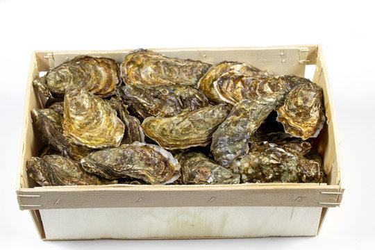 bourriche d'huîtres françaises Marennes Oléron
