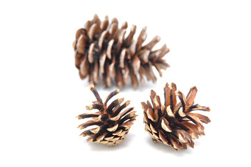 Spruce cones on a white background close-up