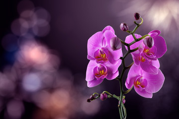 Foto op Canvas Orchidee orchid flower on a blurred purple background. valentine greeting card. love and passion concept. beautiful romantic floral composition.