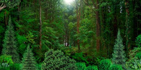 Wild dense forest natural banner