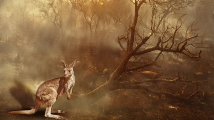 Wall Mural - Cinemagraph loop: Australian wildlife in bushfires of Australia in 2020. Kangaroo with fire on background. January 2020 fire affecting Australia is considered the most devastating and deadly ever seen