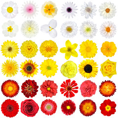 Big Collection of White, Yellow, Orange and Red Wild Flowers Isolated on White
