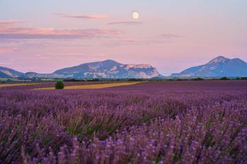 Printed kitchen splashbacks Lavender Champ de lavande en fleurs, lever de lune. Plateau de Valensole, Provence, France.
