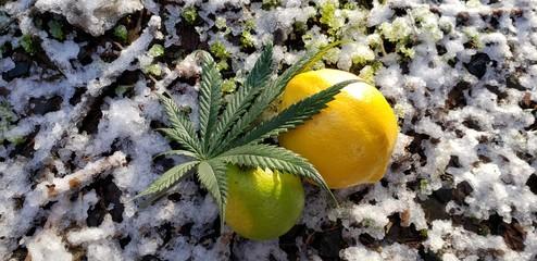 Citrine Snowy Cannabis Leaf_2