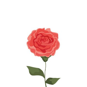 cute rose with branch and leafs design