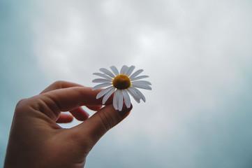 In de dag Madeliefjes flower in hand