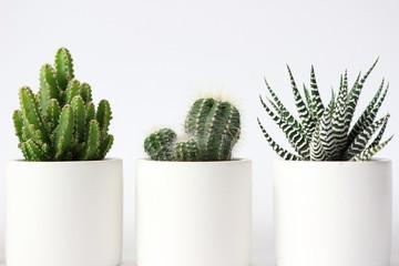 Keuken foto achterwand Cactus 白い背景の明るいサボテンの写真シリーズ