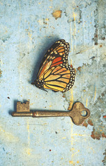 Fototapeten Schmetterlinge im Grunge Vintage still life scene of a dead butterfly and old key on rustic aged blue paper and wood background. Unlocked hidden secrets, metamorphosis, freedom, nature and nostalgia concepts.