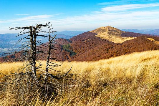 old dead tree - Bieszczady - mountains in Poland