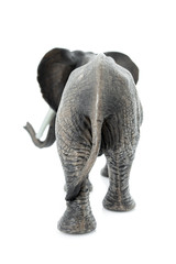 Tuinposter Olifant Portrait of an elephant isolated on the white background.