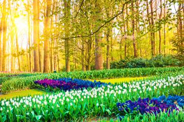 Foto auf Acrylglas Gelb Sunrise beam in the beautiful park. Spring Nature scene. Beautiful Landscape.