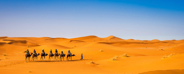 Tuinposter Kameel Camel caravan going through the sand dunes in beautiful Sahara Desert. Amazing view nature of Africa. Artistic picture. Beauty world. Panorama