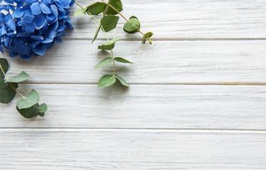 Photo sur Aluminium Hortensia Blue hydrangea flowers