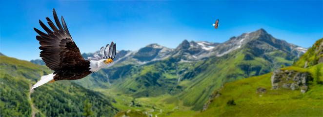 Zwei Adler fliegen in großer Höhe mit ausgebreiteten Flügeln an einem sonnigen Tag in den Bergen. Fotomurales