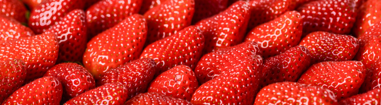 Strawberries red background. Fresh ripe strawberry banner or panorama concept.