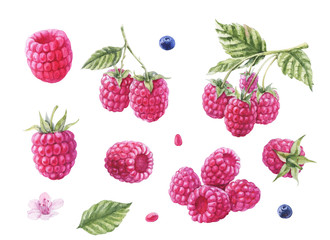 Large handdrawing watercolor raspberry berry isolated on white background with seed and blueberry, leaf, flower frontally and side view