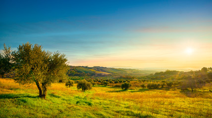 Printed roller blinds Panorama Photos Maremma sunset panorama. Olive trees, countryside and sea on horizon. San Vincenzo, Tuscany, Italy.